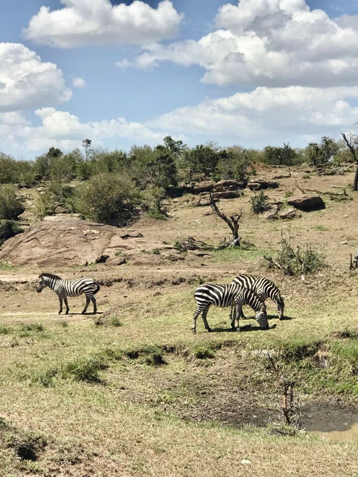 По света с Unique Estates. В Кения и Занзибар с Весела Илиева