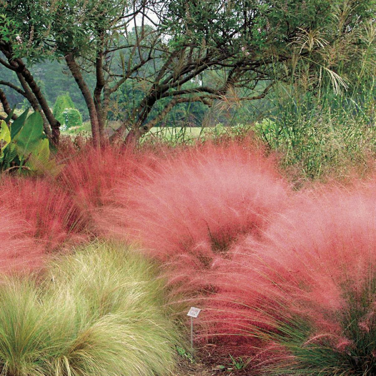 Минимализмът - душата на градината